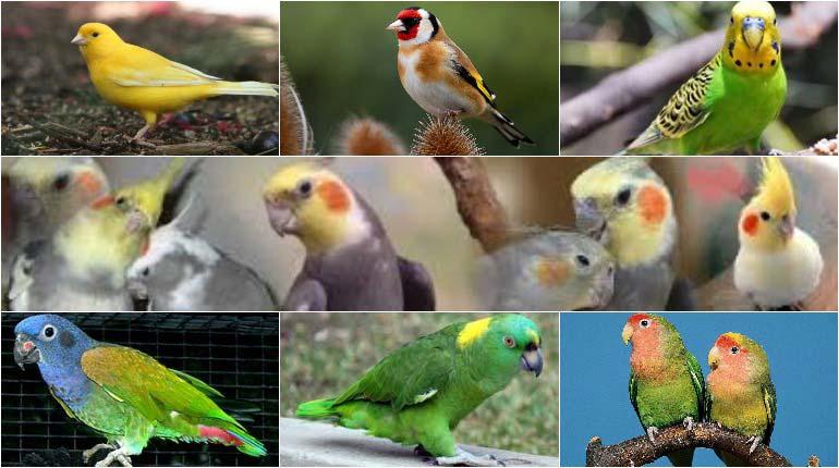 Pet Birds for Beginners