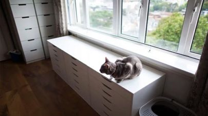 Cat-Proof-Apartment