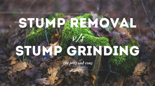 Stump removal vs. stump grinding