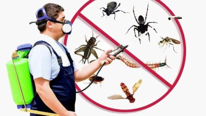 Keep Office Pest Free