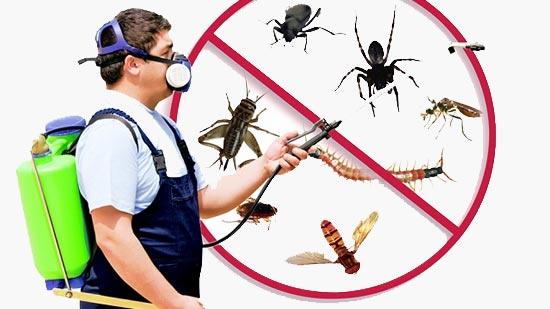 Keep Office Pest Free