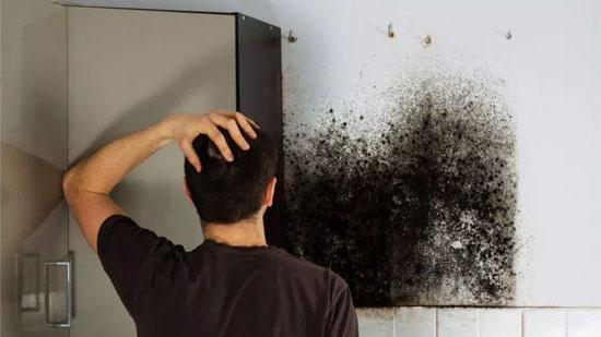 Mold-Dangerous-Health