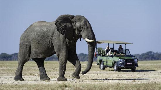 Pandemic Affecting African Safaris