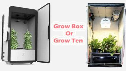 Grow-Box-Or-Grow-Tent