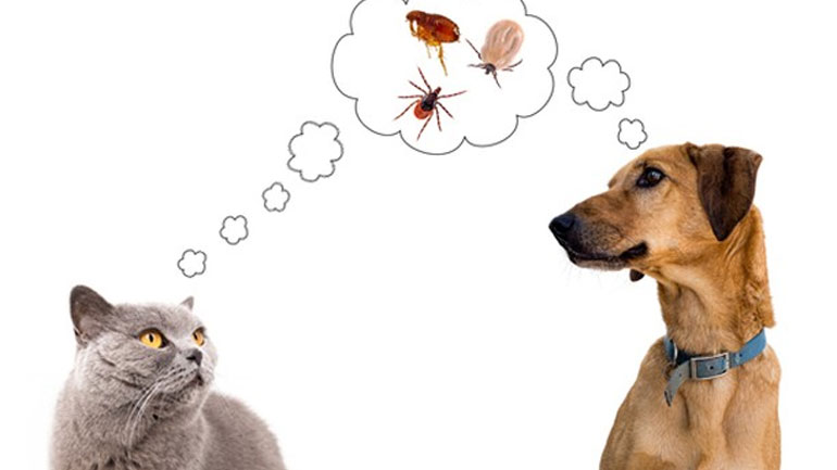 Identifying-Flea-Problem