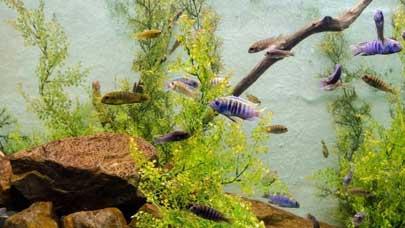 Aquarium-Fish-Take-Care