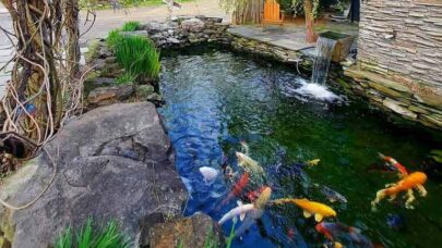 Build-Your-Own-Fishpond