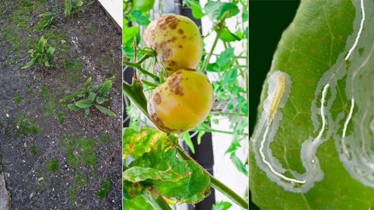 Lawn Moss, Fungus, Grubs Causes