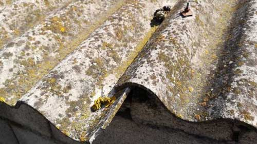 Asbestos-Affects-And-Prevention