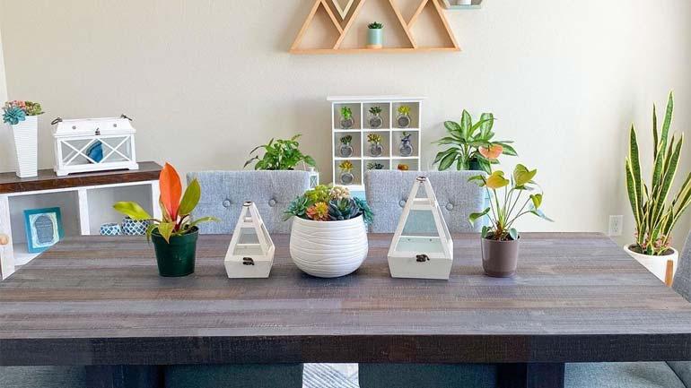 Plants Improve Indoor Air Quality